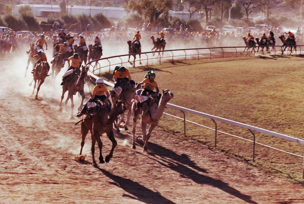 Camel Race Desert Safari Dubai