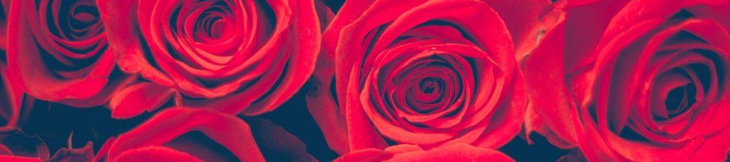anniversary-beautiful-birthday-bloom