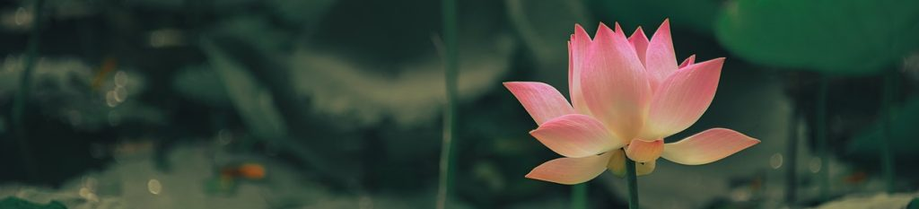 selective-focus-photography-of-pink-flower