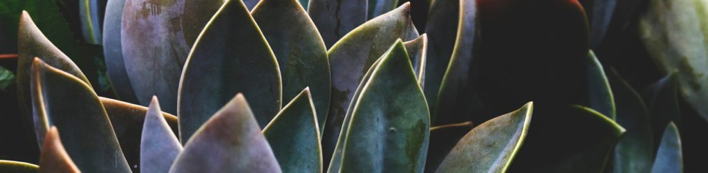 shallow-focus-photography-of-green-leafed-plants